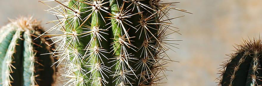 15 plantes grasses pour décorer votreintérieur