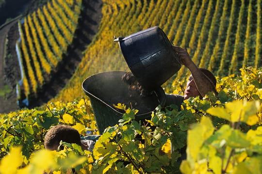 Un hectare de vigne AOC coûte 93000eurosenmoyenne