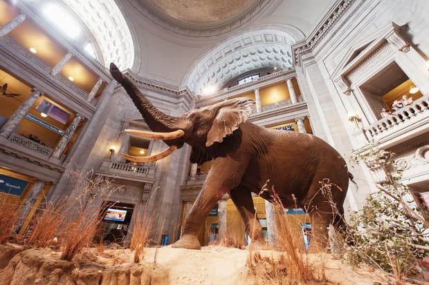 Le National Museum of Natural History, Washington DC