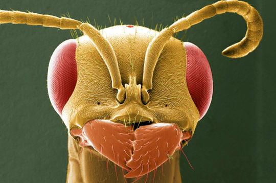 Insectes en tête à tête