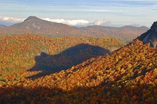 L'ours sort des bois dans les montagnes de Blue Ridge