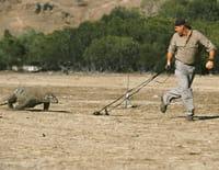 Croco chroniques : La patrouille du python