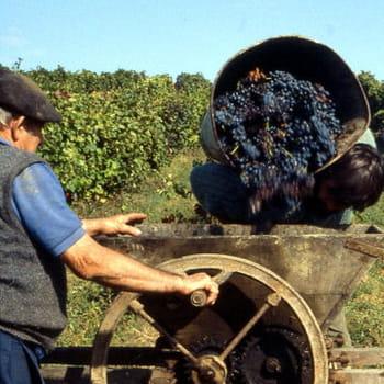 site de rencontre viticulteur
