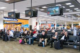 Huit chiots naissent au milieu de l'aéroport de Tampa en Floride