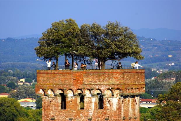 Le jardin suspendu de la Torre Guinigi en Toscane