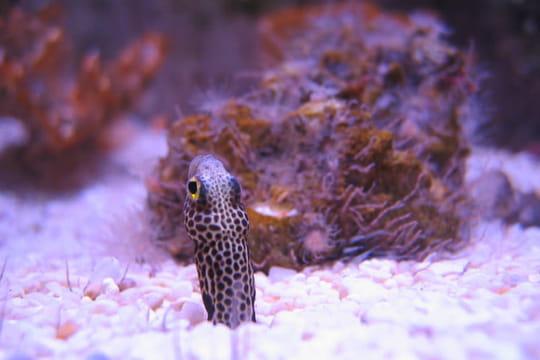 Aquarium de La Rochelle: une visite dépaysante et instructive, infos