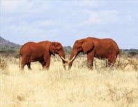 Planète safari : Tsavo, la terre des éléphants rouges