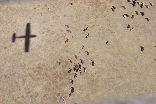 Un avion au-dessus de la Tanzanie