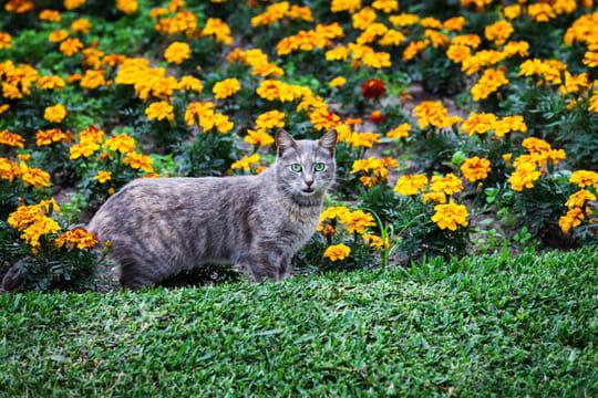 Répulsif pour chat: comment le choisir et l'utiliser