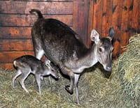 Zoo nursery Berlin
