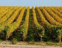 Echappées belles : Bourgogne, terre de vignes