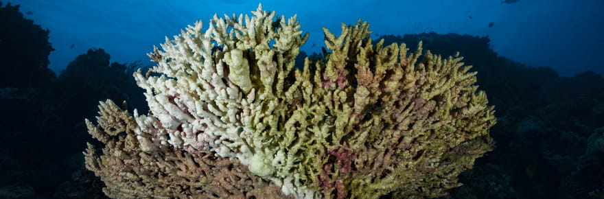 """""""Récifs coralliens, un enjeu pour l'humanité"""", l'expo photo à ne pas manquer à l'Unesco"""