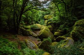 Les plus belles forêts de France