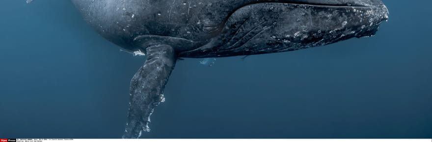 """Blue whale challenge: les règles du nouveau """"jeu"""" qui pousse les ados au suicide"""