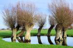 Les trente arbres les plus insolites