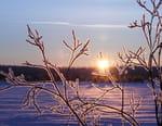 Les merveilles cachées de l'hiver