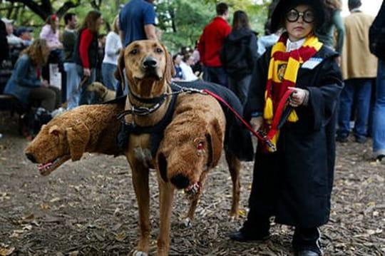 Les animaux les mieux déguisés pour Halloween