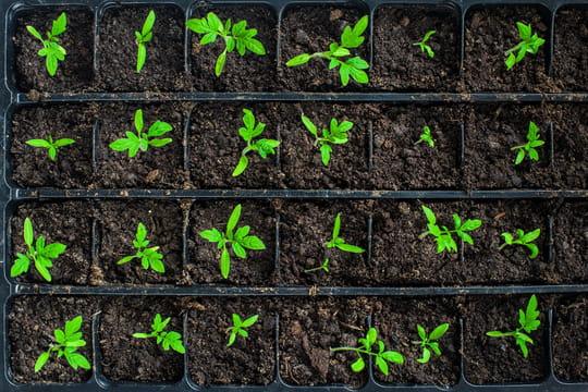 Semis: comment bien les réussir dans son jardin