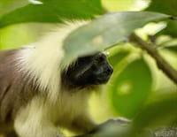 La Colombie sauvage : Par monts et par vaux