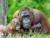 Bienvenue chez les orangs-outans : Deux adolescentes très précoces