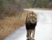 Au coeur des parcs nationaux : Parc national de Kruger (Afrique du Sud)