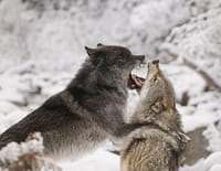 Animal Fight Club : Animaux meurtriers