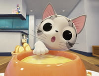 Chi mon chaton : Chi met la main à la patte