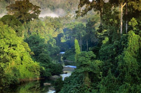 Jungle de Bornéo