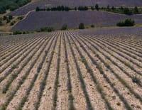 Les 100 lieux qu'il faut voir : La Provence, des Alpes au Luberon