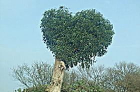 Un arbre par couple pour reboiser l'Amazonie