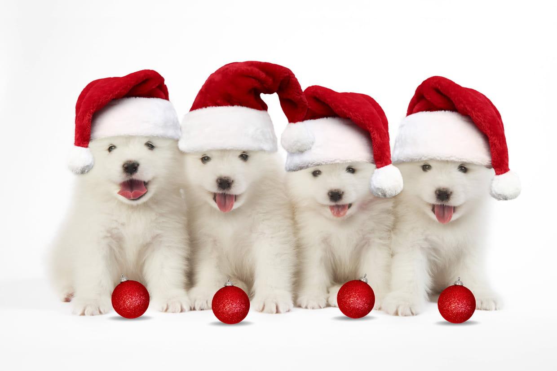 Joyeux Noel Sms Textes Humour Cartes De Vœux Tout Pour Un