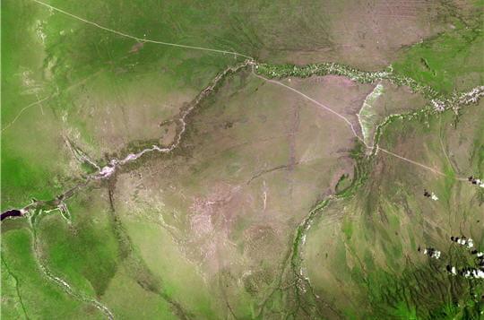 Vert tendre de Tanzanie