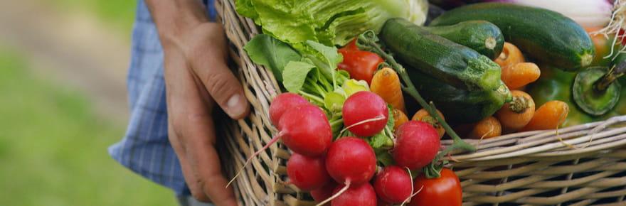 Chèque alimentaire: bio, pour qui... Tout ce qu'il faut savoir
