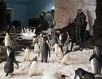 Antarctica : le palais des manchots