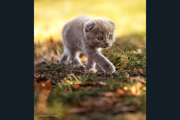 Chaton peureux