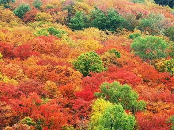 Vos plus belles photos aux couleurs de l'automne