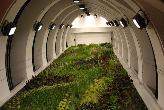 des plantes au sous sol. Black Bedroom Furniture Sets. Home Design Ideas
