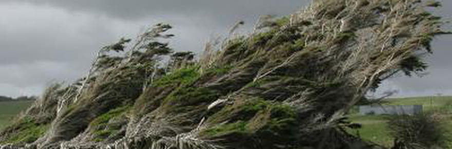 Les vents violents façonnent le paysage de Slope Point