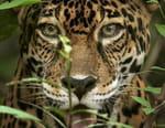 Biodiversité : les sanctuaires de l'espoir