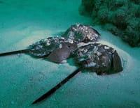 Alien Crab