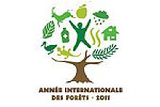2011, année internationale des forêts