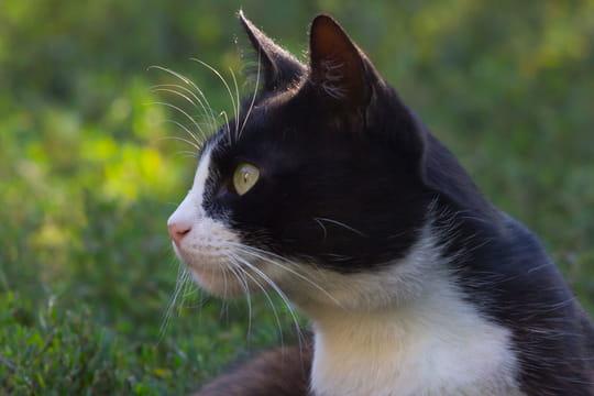 Son chat disparaît à Londres, elle le retrouve 8ans plus tard à Paris