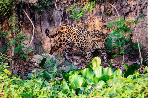 Parc national du Corcovado