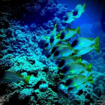 phosphorescence dans les eaux de mer rouge