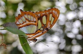 le fond chargé de tâches lumineusesdétourne le regard du papillon.