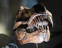 Extinctions massives, la vie en péril