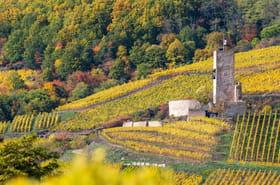 Les meilleures balades viticoles
