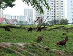 Singapour : La jungle urbaine