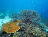 Corail, le coeur de l'océan