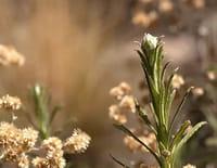 Les nouvelles aventures des plantes : En Amérique latine